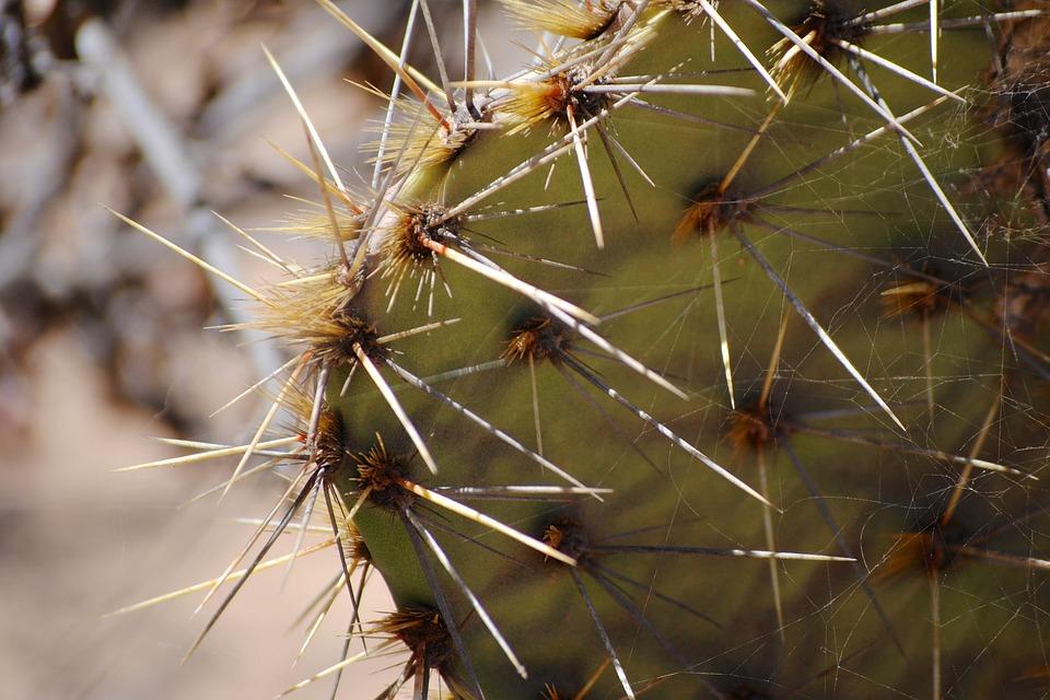 Cactus, Torrey Pines, Spikes