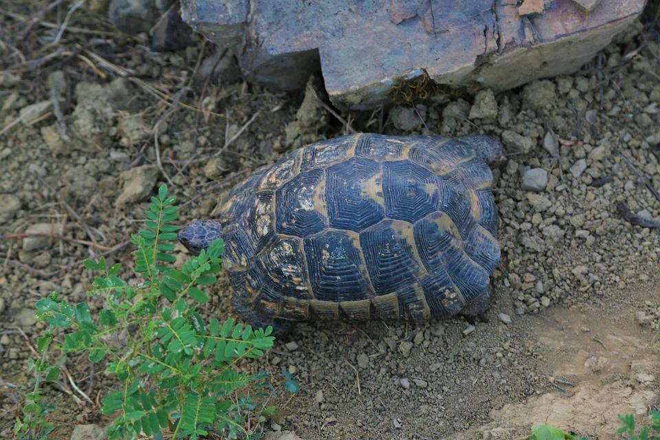 Tortoise, Animal, Nature, Bird, Wild