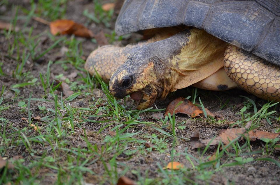 Tortoise, Shell, Reptile, Zoo, Slowly, Armor, Tough