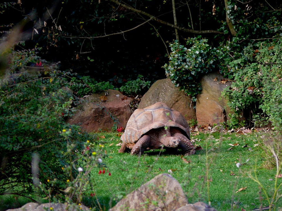 Turtle, Zoo, Animal, Wild, Tortoise, Giant