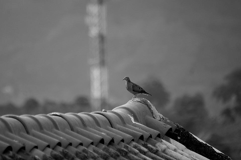 Black And White, Bird, Ave, Tortola