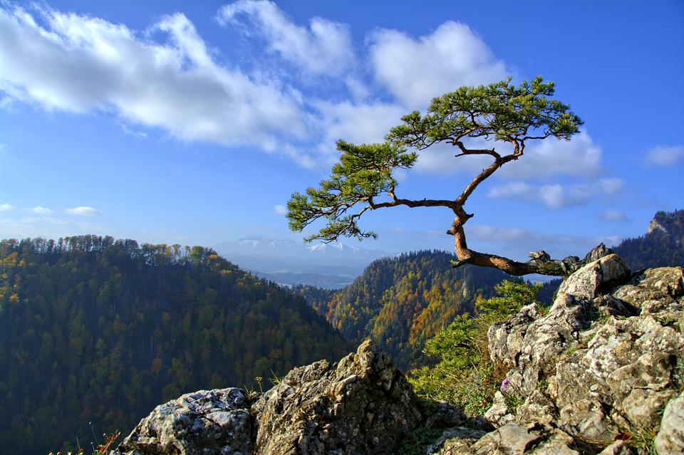 Pieniny, Pine, Mountains, Trail, Poland, Tour, Nature