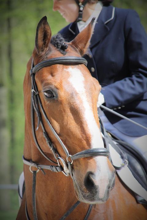 Horse Head, Bridle, Ride, Tournament, Dressage, Horse