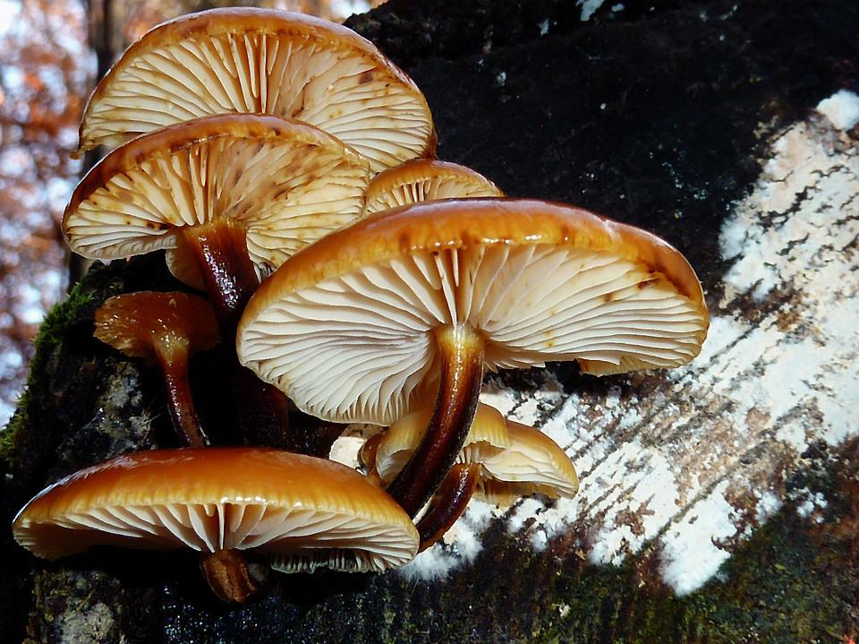 Mushrooms, Forest, Autumn, Nature, Toxic