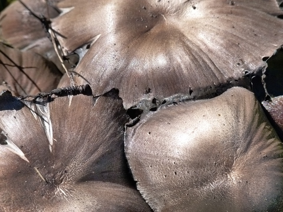 Wild, Mushroom, Poisonous, Toxic, Stacked, Group