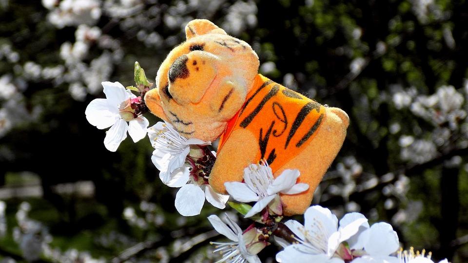 Toy, Cherry, Nature, Flower, Outdoors, Plant, Season