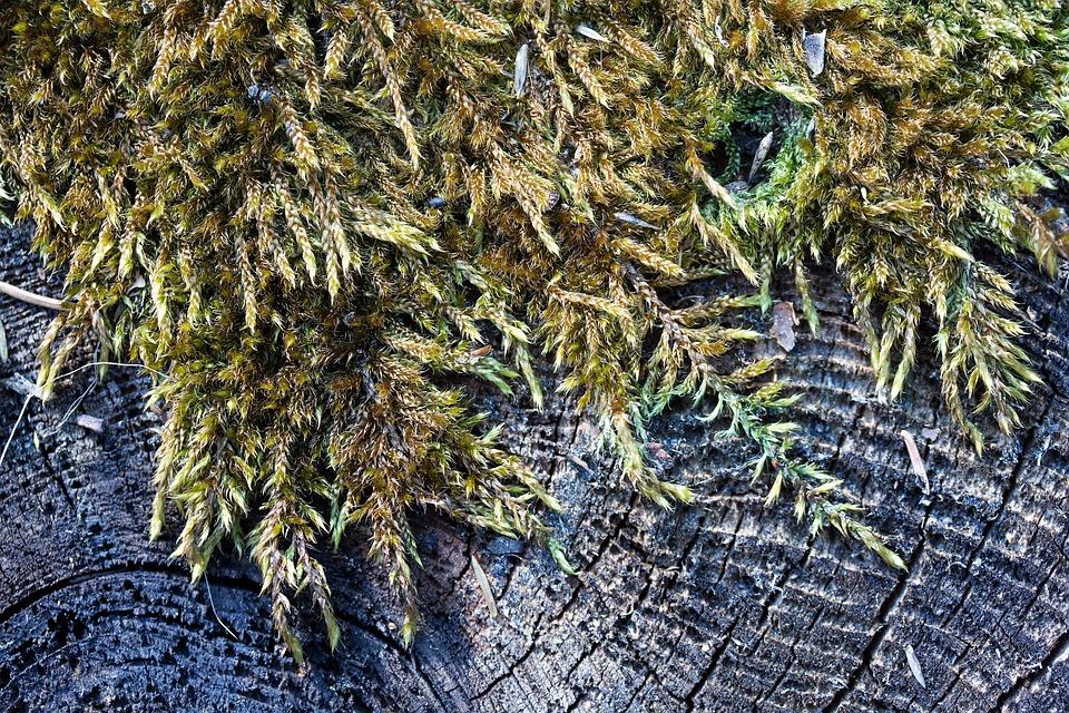 Tree, Tree Stump, Like, Traces, Weathered, Annual Rings