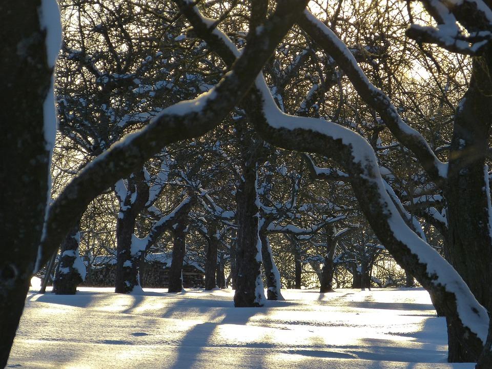 Snow, Traces, Winter, Wintry, Tree, Trees, Winter Mood