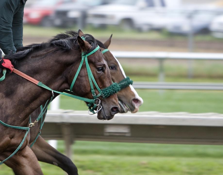 Horses, Track, Race, Horse Racing, Racecourse