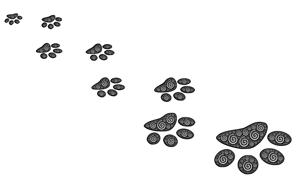 Footprints, Path, Prints, Tracks, Tracking, Step