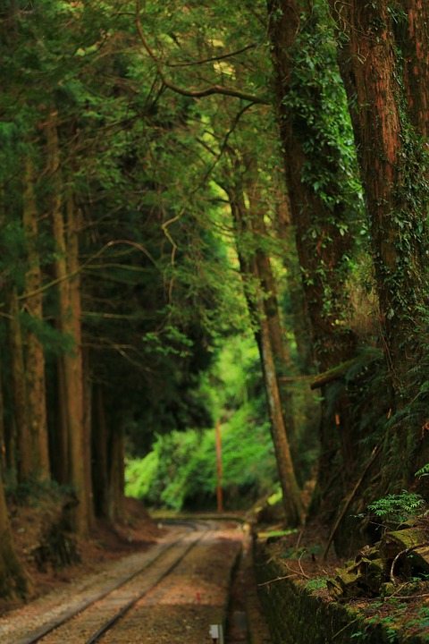 Forest, Railway, Woodland, Way, Tracks, Dark Green