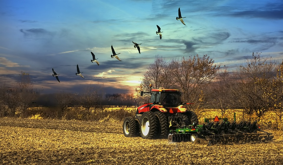 Scenery, Sunset, Tractor, Birds, Trees, Artistic