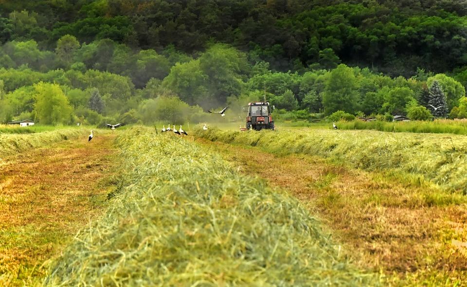 Hay, Harvest, Field, Fieldwork, Mow, Tractor, Tractors