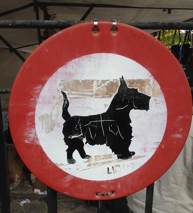 Traffic Sign, Dog, Strange, Funny, Unusual
