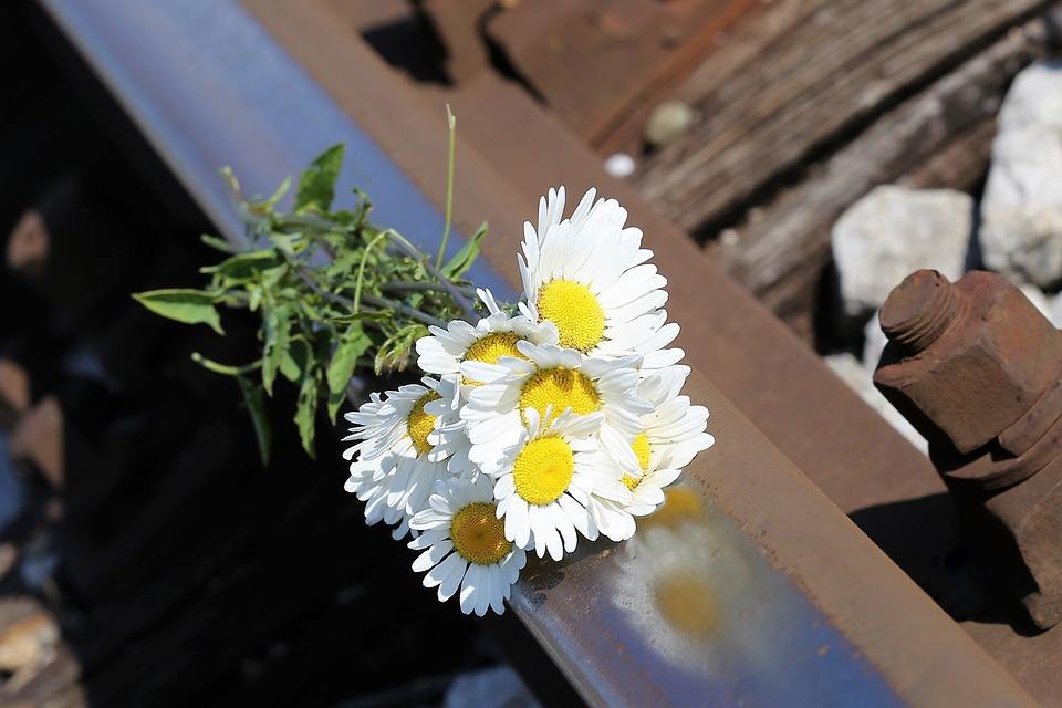 Daisy Bouquet On Railway, Lost Love, Memories, Tragedy