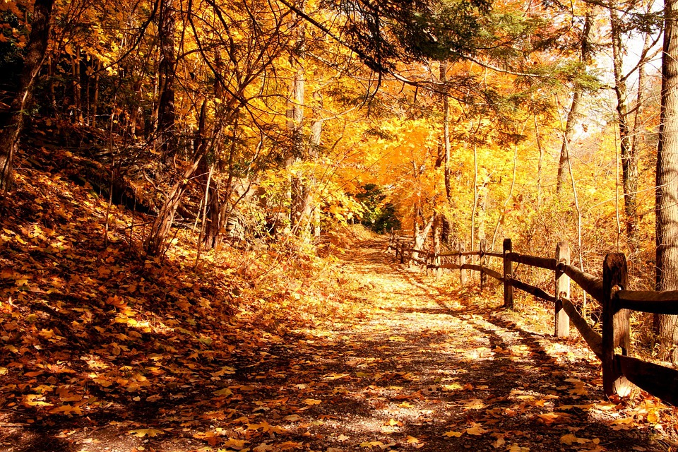 Forest, Trail, Forest Trail, Autumn, Fall, Fall Leaves