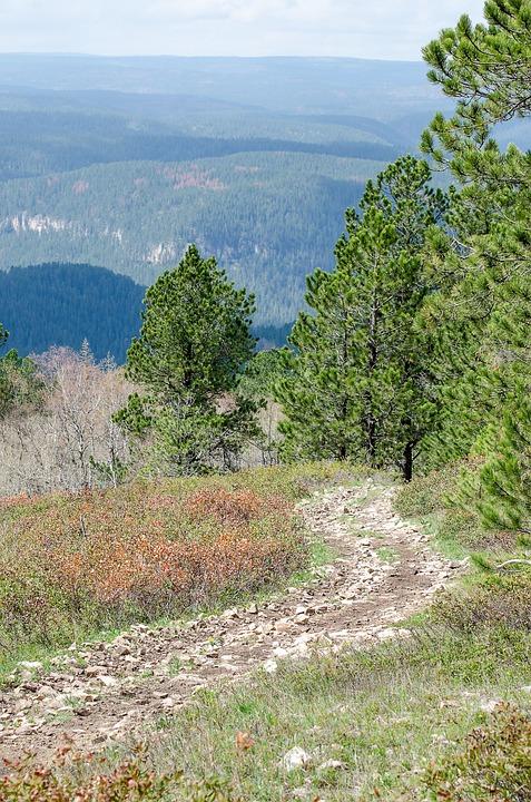 Mountain Trail, Trees, Trail, Mountains, Green, Far