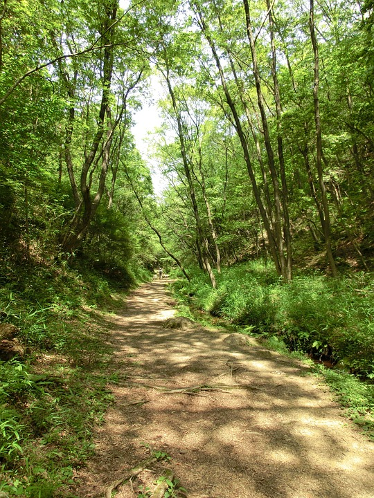 Path, Trail, Forest, Nature, Outdoor, Green, Foliage