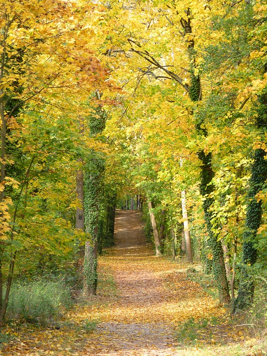 Away, Autumn, Trees, Leaves, Nature, Forest, Trail