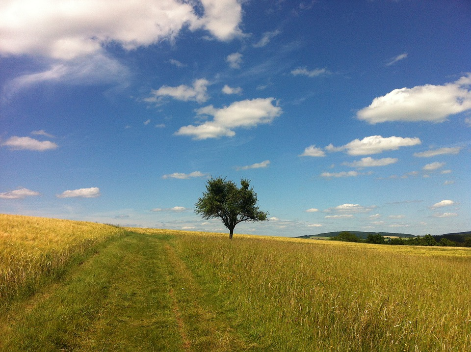 Clouds, Summer, Tree, Trail, Field, Middle Rhine, Rhine