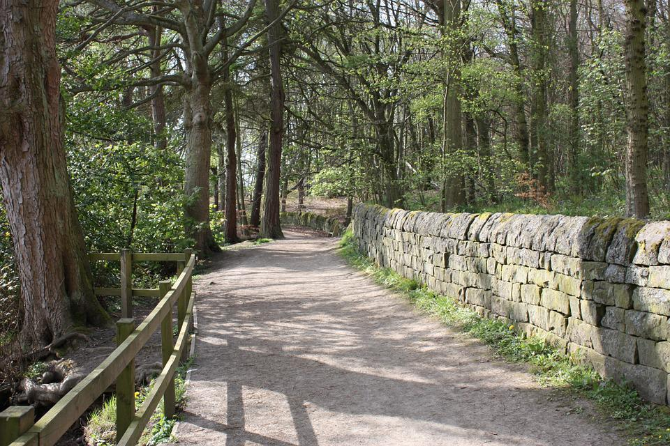 Path, Woods, Footpath, Nature, Outdoors, Trail