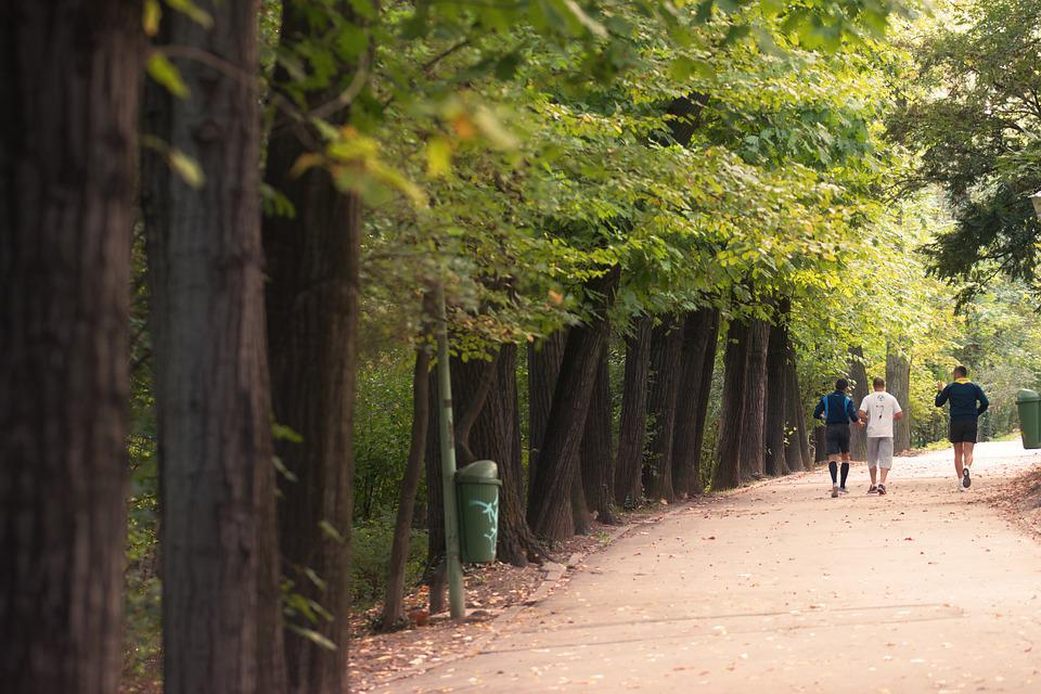 Alley, Park, People, Men, Running, Jogging, Path, Trail