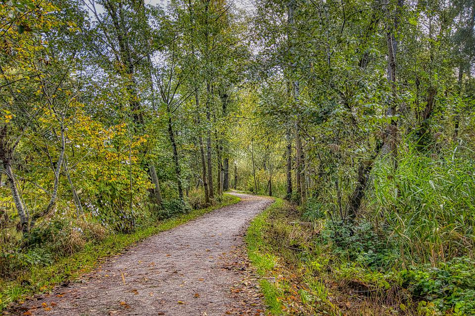 Trees, Forest, Trail, Path, Away, Promenade
