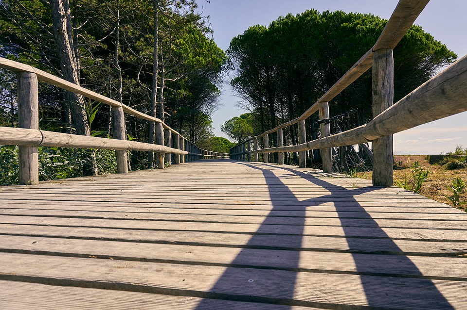 Wooden Track, Plank, Railing, Trail, Cycle Path, Away