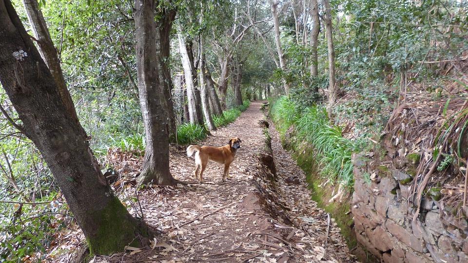 Madeira, Portugal, Levada, Hike, Island, Trail, Nature