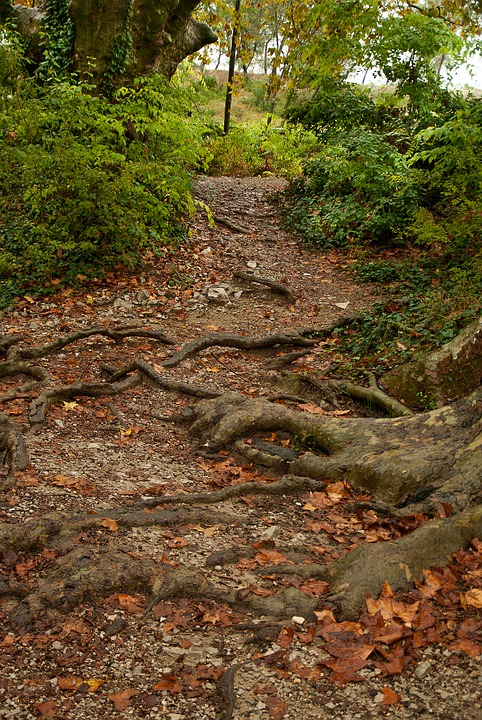 Trail, Forest, Roots, Undergrowth, Leaves