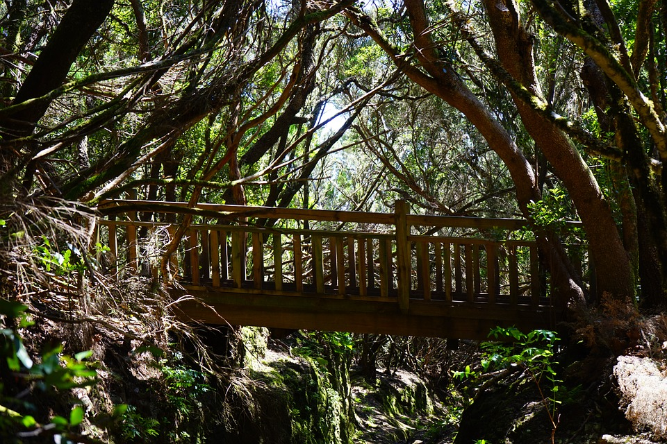 Web, Bridge, Forest, Trail, Away, Path, Tenerife