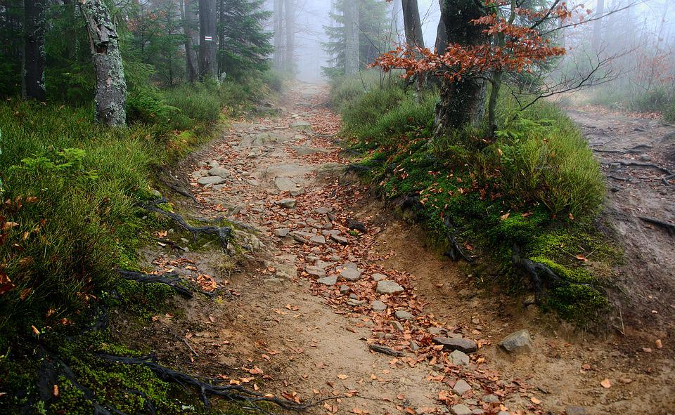 The Path, Trail, The Roots Of The, The Stones, The Fog