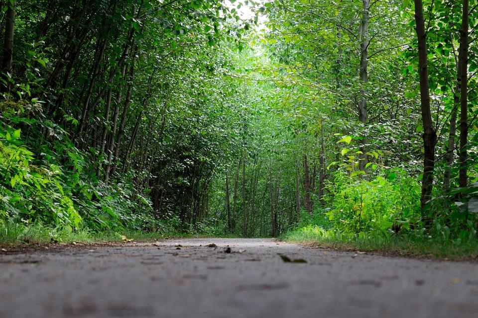 Trail, Hike, Nature, Hiking, Adventure, Travel, People