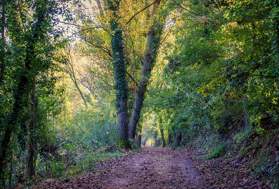Path, Trail, Nature, Landscape, Adventure, Walk, Forest