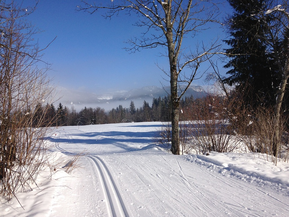 Cross Country Skiing, Trail, Winter
