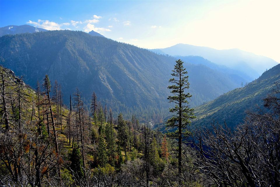 Mountains, Nature, Trees, Trail, Wood, Landscape