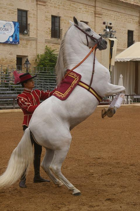 Horse, Dressage, Training
