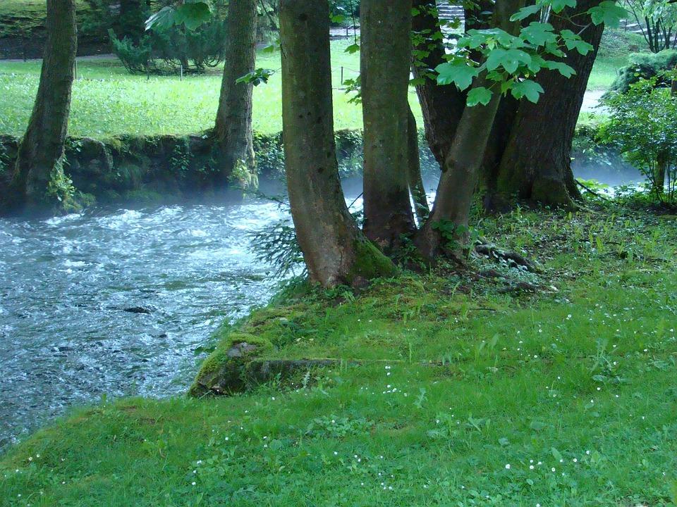 Spring, Stream, Creek, Brook, Nature, Tranquil
