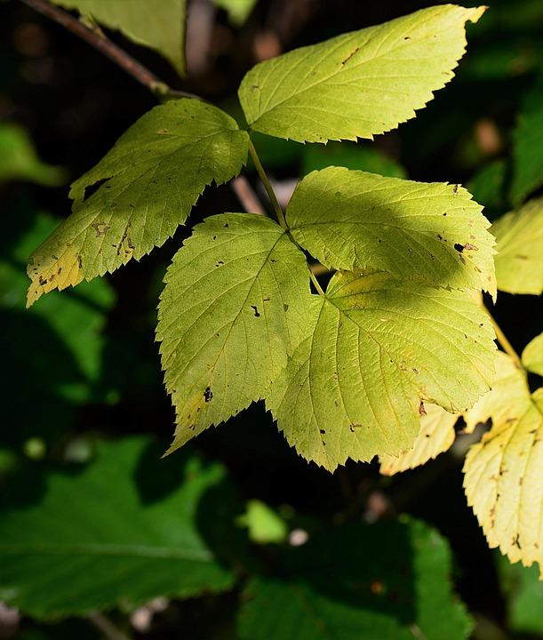 Leaves, Autumn, Fall Foliage, Transience