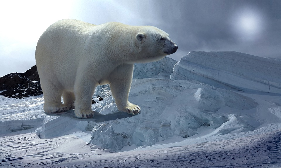 Polar Bear, Glacier, Cold, Threat, Transience, Awe