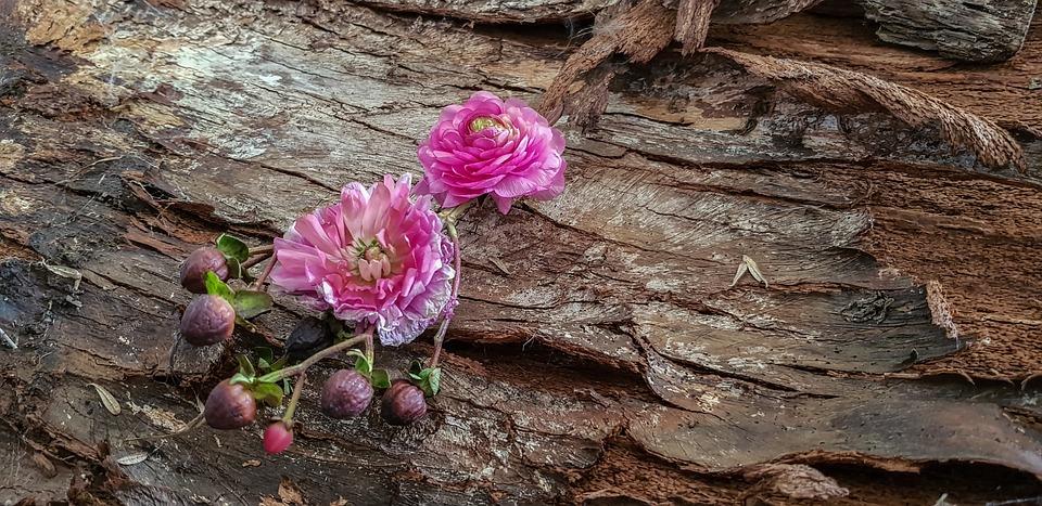Silent Flower Heads Life, Tree Bark, Old, Transient