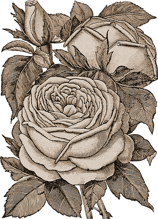 Flowers, Transparent, Sepia, Roses, Bouquet, Plant
