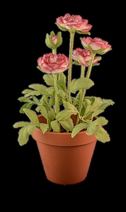 Transparent, Transparent Background, Flowerpot, Fake