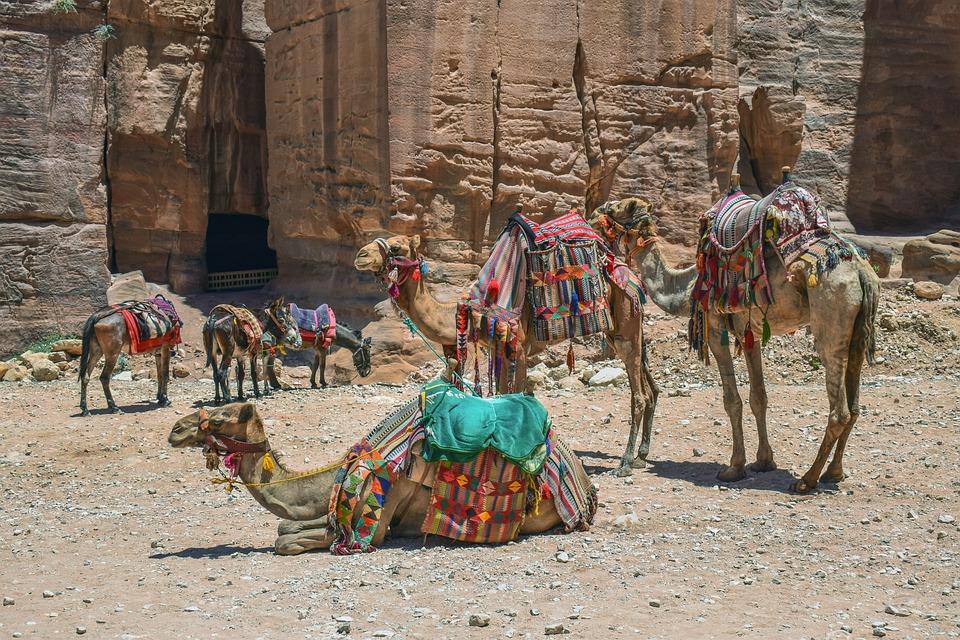 Camels, Donkeys, Transportation, Desert, Canyon