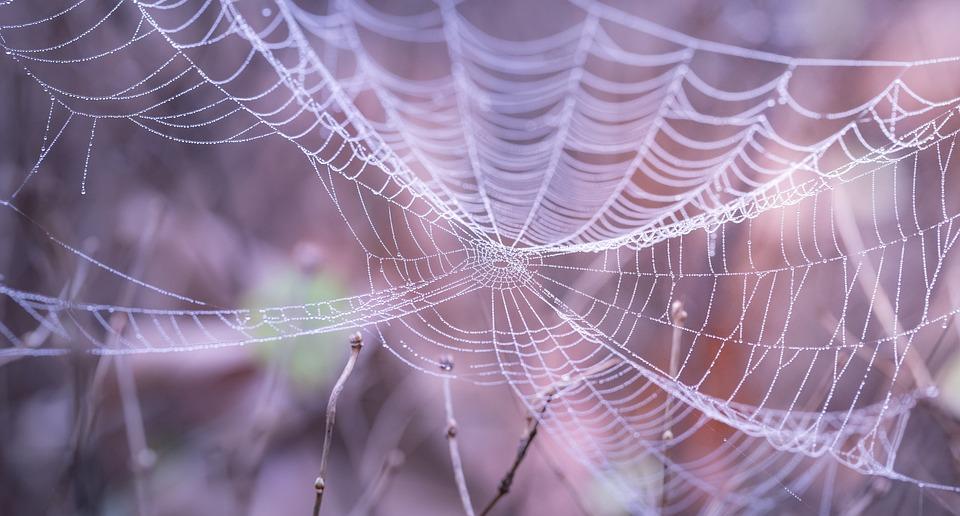 Cobweb, Close-up, Macro, Spiderweb, Trap, Web