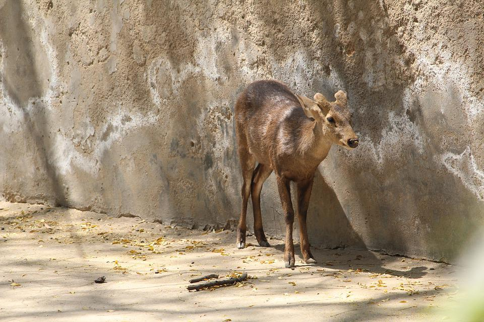 Deer, Zoo, Cage, Trapped, Nature, Wild, Outdoors