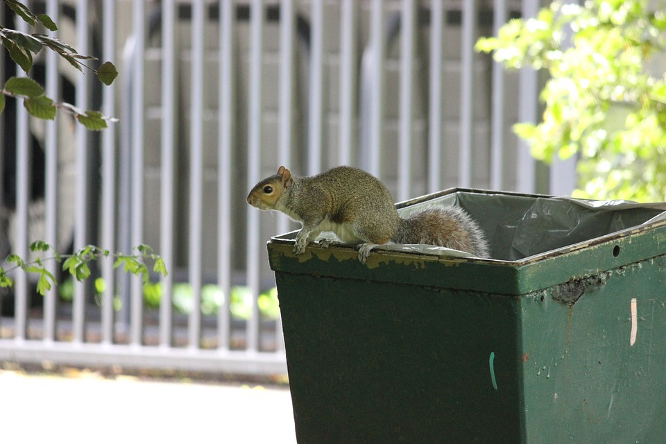 Squirrel, Trash, Bin, Park, Mammal, Rodent, Furry