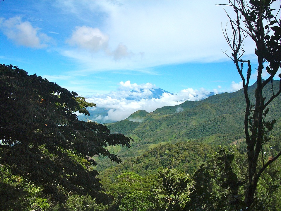 Panama, Cloud Forest, Sky, Clouds, Forest, Travel