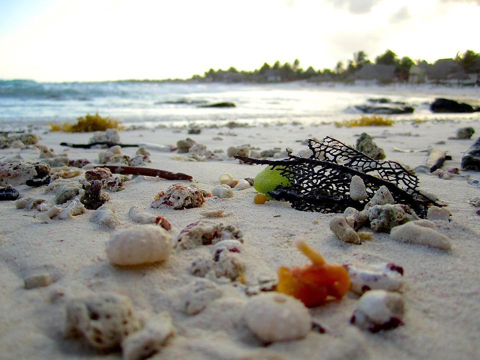 Beach, Shells, Shore, Coral, Travel, Sand, Sea Shell