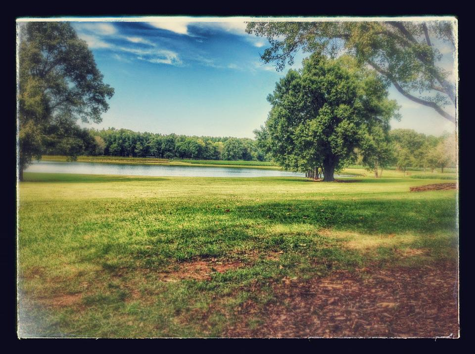 Vineyard, Lake, Grapes, Countryside, Wine, Travel